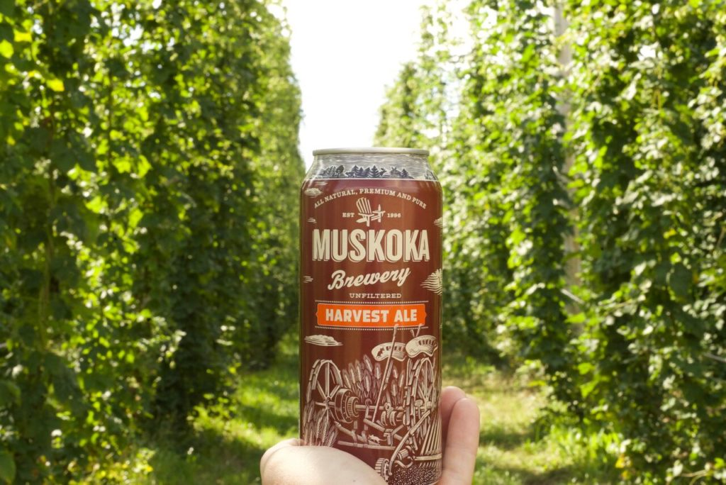 Blog - Sep - Harvest Ale Image in Hop Field 2