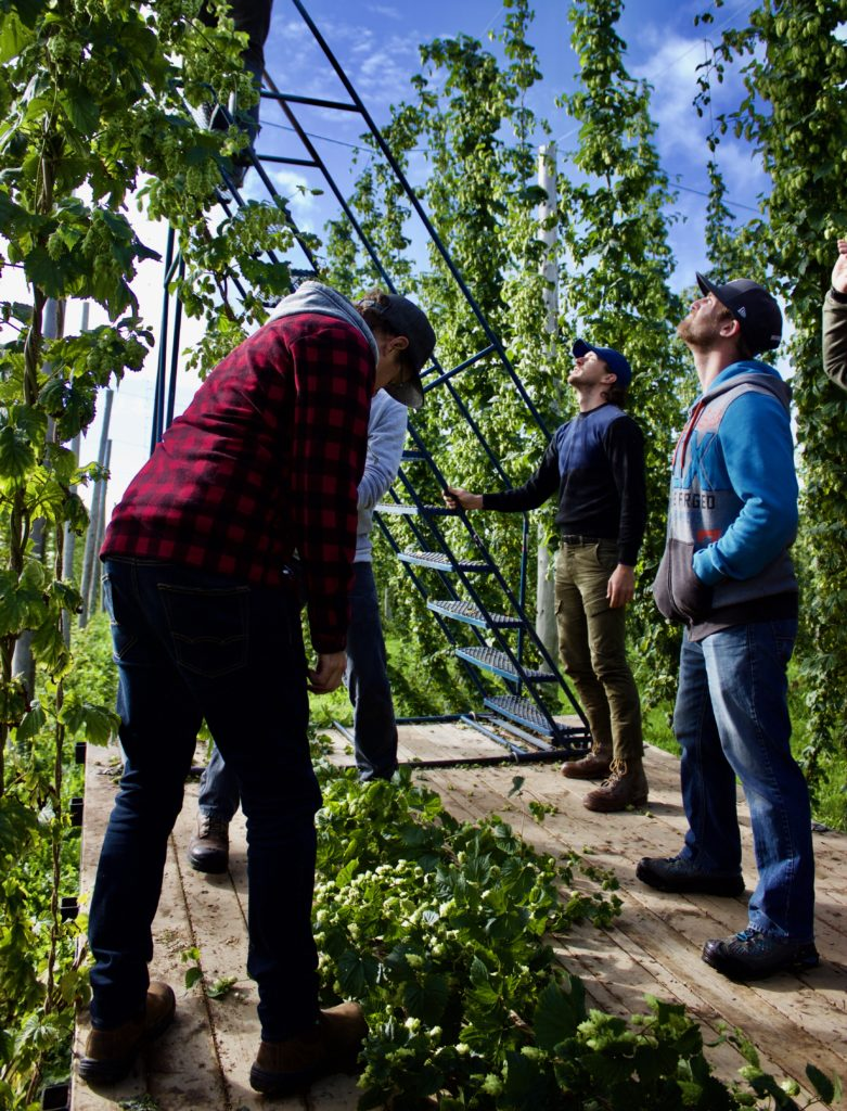 Blog - Sep - Highland Hop Yard